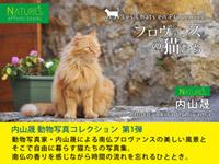 プロヴァンスの猫たち